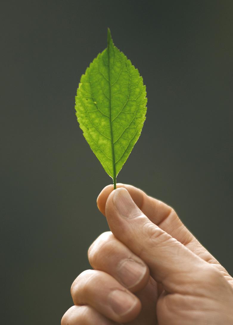 Grünes Blatt zwischen Fingern gehalten